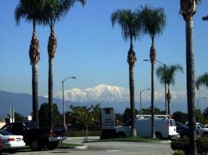 californie - sneeuw en palmbomen