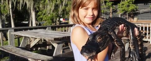 Gators en Everglades